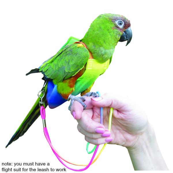 Bird Flight Suit: Information and Tutorial 101