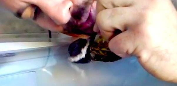 Bird CPR: How to Save Your Bird as Gentle as Possible