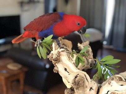 Bird Cage Perches for Your Pet's Little Home