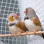 5 Best Finch Cages You Should Buy