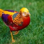 7 Most Exotic Birds That Will Amaze You