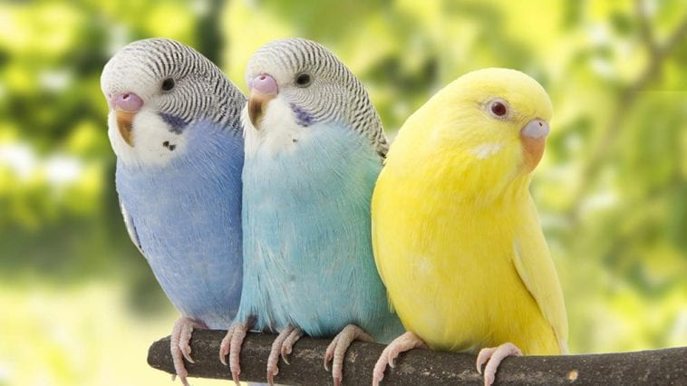 5 Talking Birds Best to Have as Pets