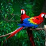 Complete A to Z List of All Types of Parrots