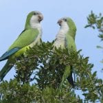How to Build the Best Quaker Parrot Cage