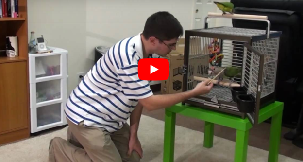 Getting Your Parrot Into an African Grey Travel Cage