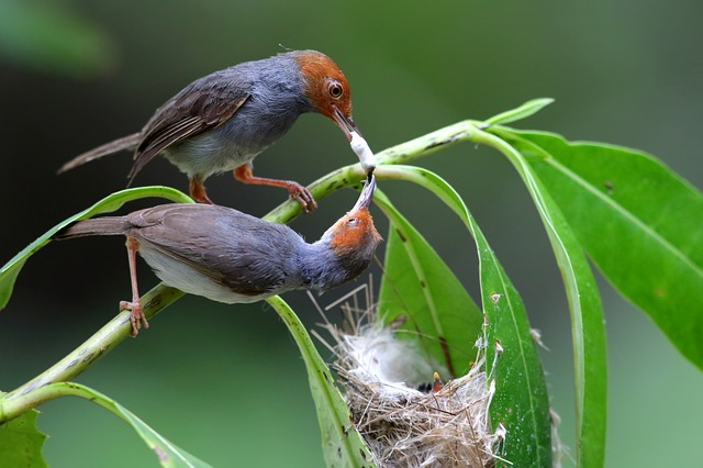 How to Become the Best Bird-Sitter