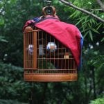 How to Creatively Use Natural Tree Branches for Bird Cages