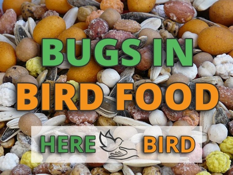 Bugs in Bird Seed: Causes and Treatment