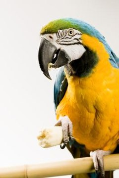 Calcium for Birds: Keeping Your Parrots Safe from Calcium Deficiency