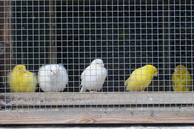 Housing Multiple Bird Species Together: Dos and Don'ts