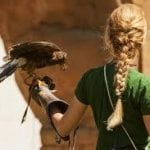 Comprehensive Guide on How to Become a Falconer