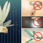 How to Avoid Cockatiel Night Frights