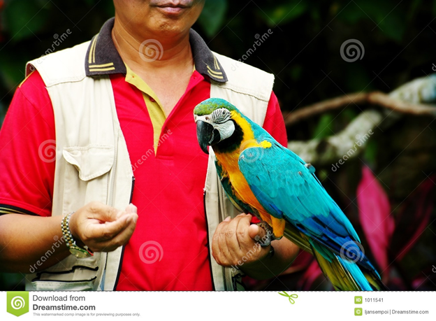 Guide to Holding a Parrot in the Most Proper Way