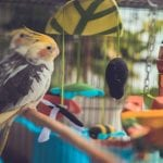 How to Choose An Ideal Humidifier for Birds