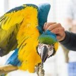 Expert Tips For a Successful Macaw Training