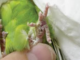 How Bird-Sitters Respond to Parrot Foot Problems