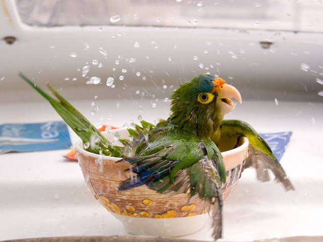 Choosing the Perfect Parrot Shampoo for Your Pet