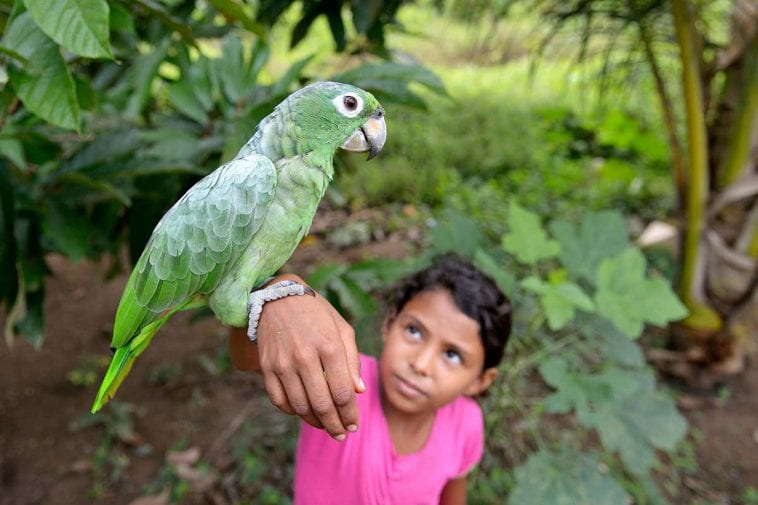 Dos and Don'ts When Living With Parrots