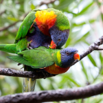 How Do Parrots Mate: Avian Sexual Reproduction Guide