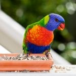 Finding The Right Parrot Seeds to Feed Your Pet