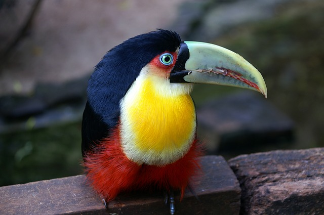How Much Will An Aviary For Your Toucan Cost?