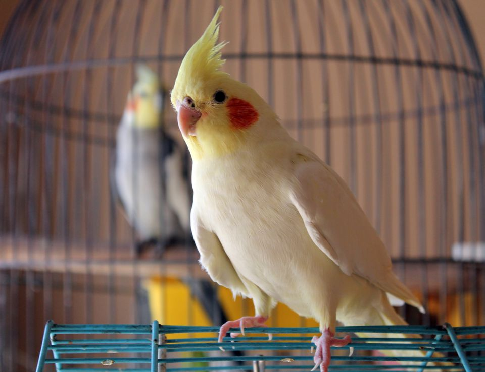 Description: Image result for Small Bird Supplies Needed for a Great Bird Keeping