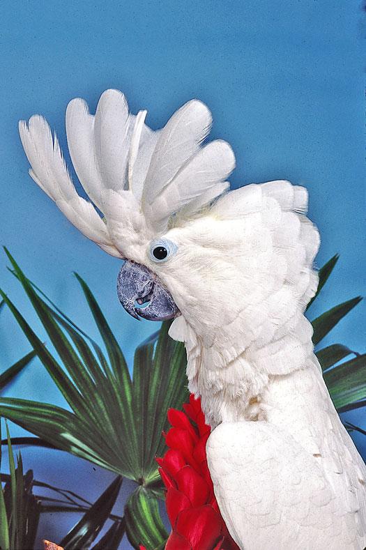 Description: Image result for Parrot feather Language