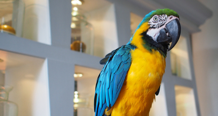 Description: Image result for How to Stop a Parrot From Biting: Bird Training 101