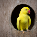How to Build Your Own Parrot Nestbox